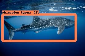 whale shark naturalist.png